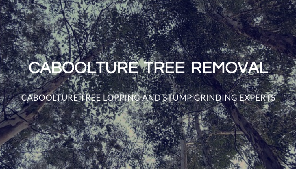 Caboolture Tree Removal Banner